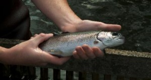 Sunburst Trout Farms | Flavor, NC