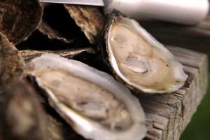 Carolina Mariculture | Cedar Island, NC