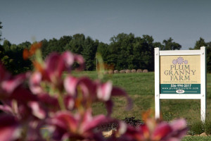Plum Granny Farm | King, NC