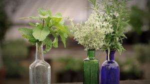 Herbs | Flavor, NC