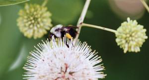 Pollinators - Flavor, NC