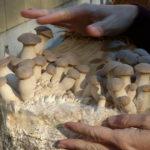 Specialty Mushrooms | Hubert, NC
