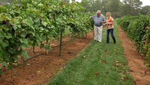 Table Grapes | Flavor, NC