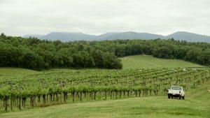 From The Vineyard | Biltmore
