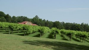 From The Vineyard | Gregory Vineyards