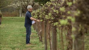 From The Vineyard | Sanctuary Vineyards