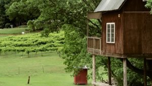 From The Vineyard | Treehouse Vineyard