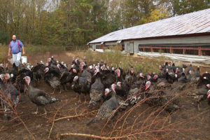 Heritage Turkey | Louisburg, NC