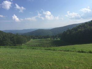 Burntshirt Vineyards | Flavor, NC