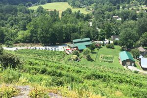 From The Vineyard | Grandfather, A Secret Garden, & Grapefull Sisters