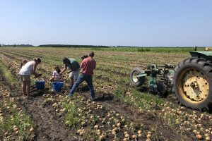 Onions | Engelhard, NC