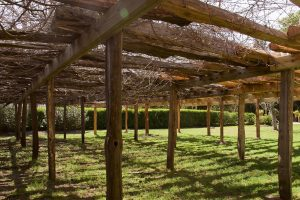 From The Vineyard | Childress / Mothervine