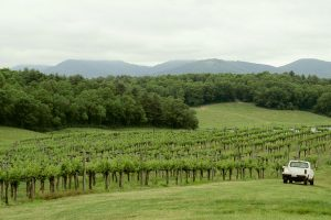 From The Vineyard | Treehouse Vineyard / Biltmore