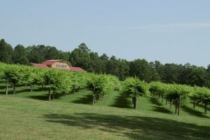 From The Vineyard | Gregory / Yadkin Valley Bus Tour